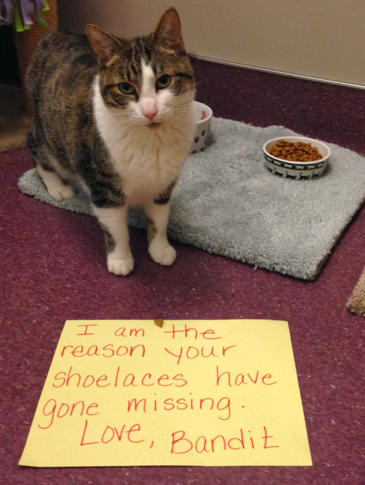 http://hssvacc.blogspot.com.au/2014/01/cat-shaming-hssv-edition.html